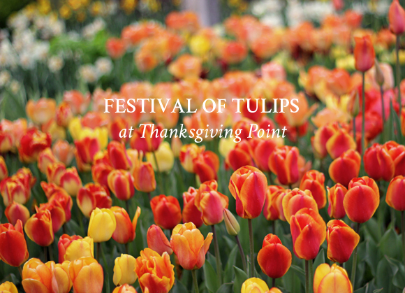 Festival of Tulips / Part 1