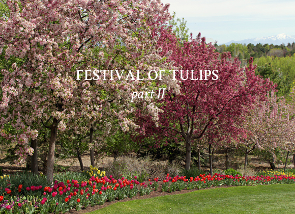 Festival of Tulips / Part 2